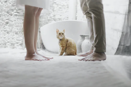 Couples feet by a cat